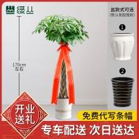 武汉公司绿植租摆价格办公室植物租赁比价